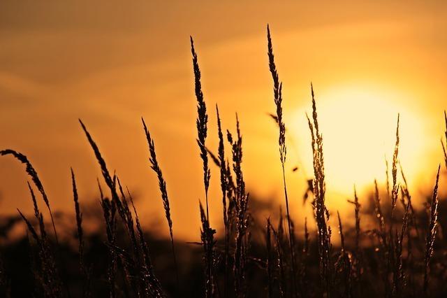sunrise-3712483_640 min